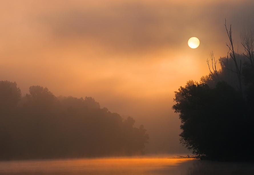 Nebelstimmung in den Auen der Donau