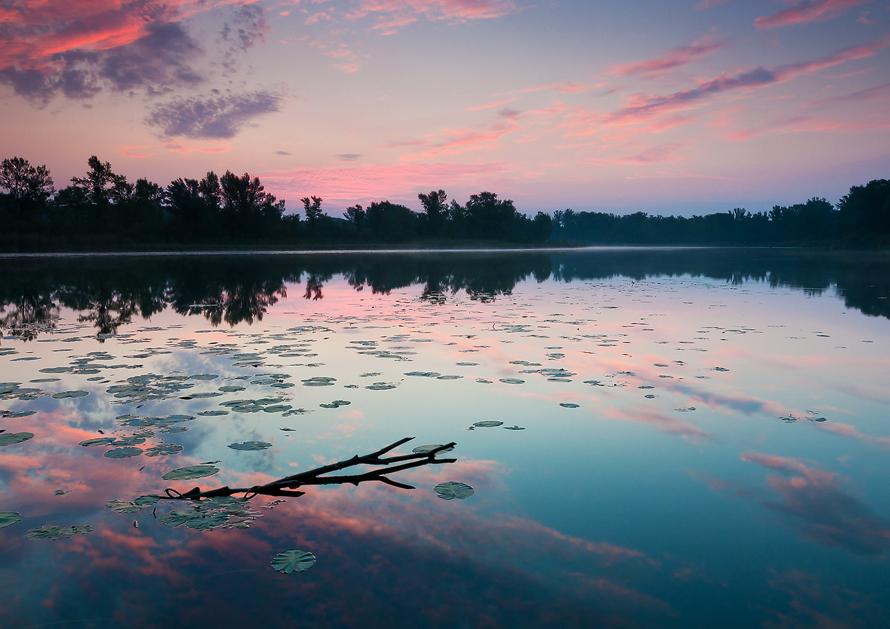 Donau-Auen Abendlicht