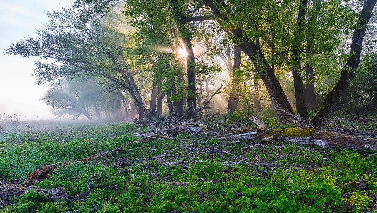 Gegenlicht im Auwald