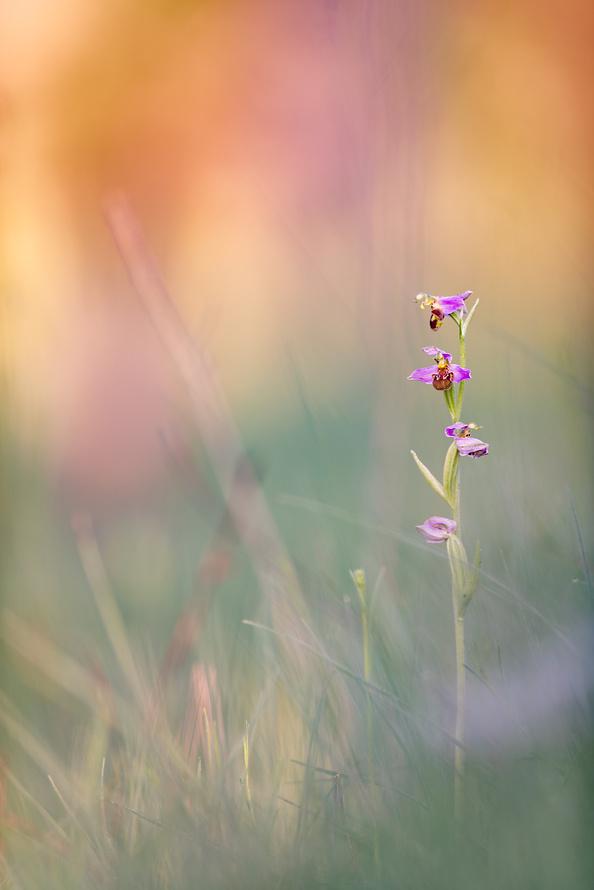 Orchideen-009_