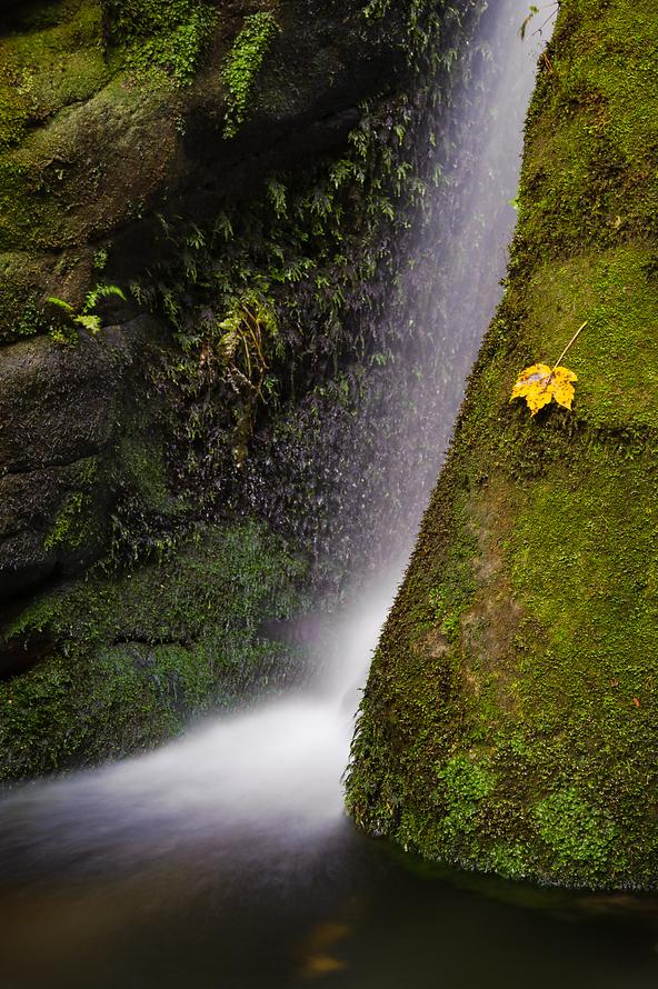 Elbsandstein-011-Wasserfall-mit-Ahornblatt