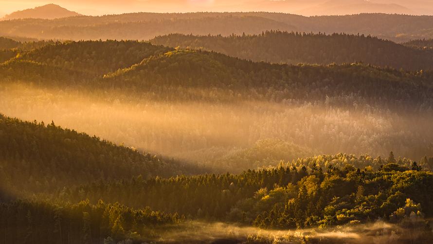 Elbsandstein-016-Goldener-Herbstwald
