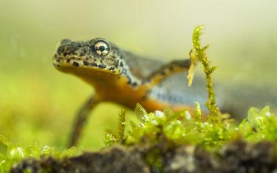 Das Erwachen der Amphibien