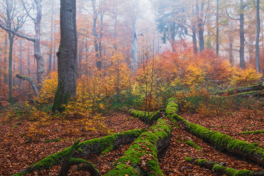 Wald-008-Herbst-im-Spessart