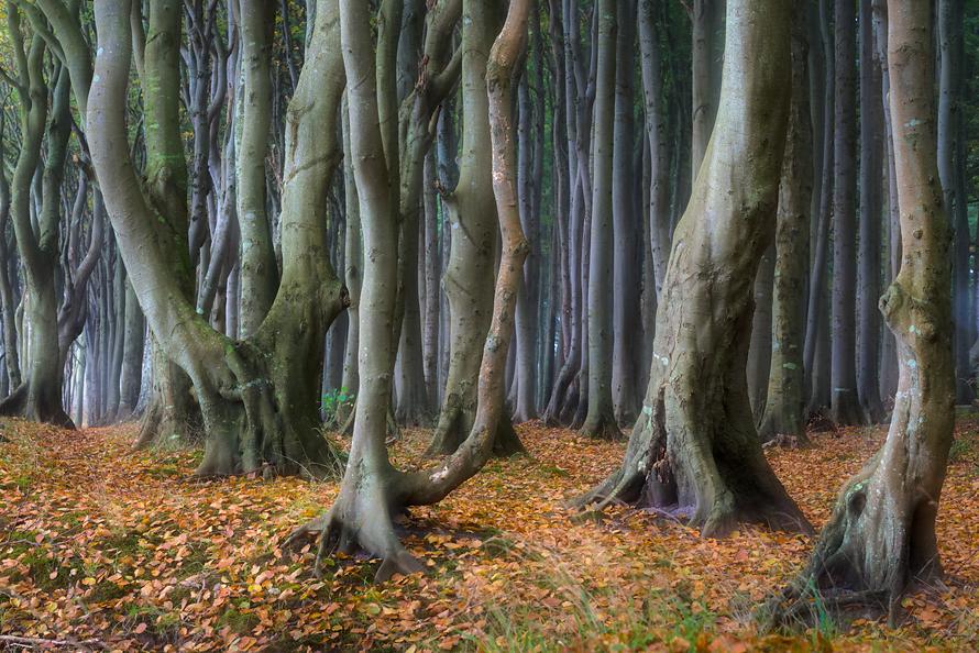 Wald-019-Herbstbuchen