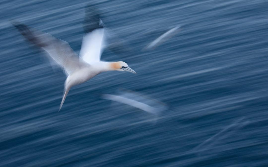 Daten und Fakten zu Helgoland