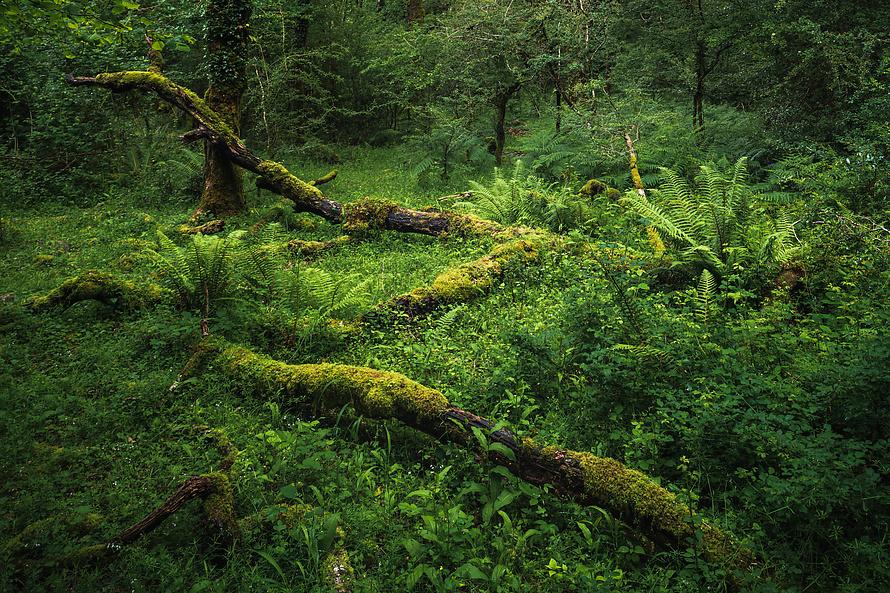 Dartmoor-011_