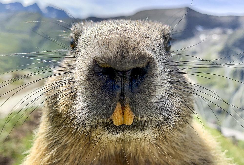 Wildlife Fotografie mit dem Handy, ist das überhaupt möglich?