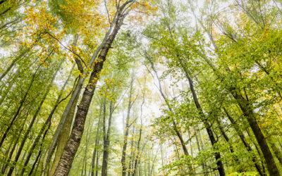 Mit dem Fisheye durch den Herbstwald
