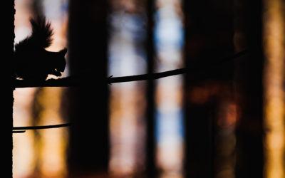 Silhouetten in der Naturfotografie
