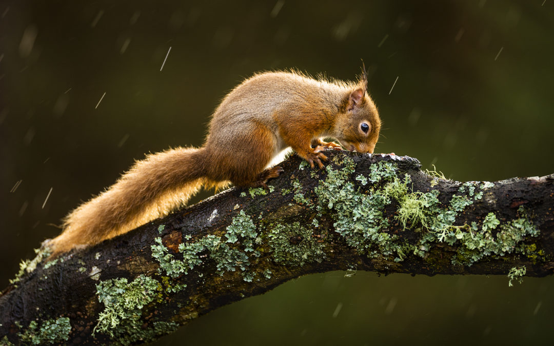 Bildpräsentation: Regen und Gegenlicht