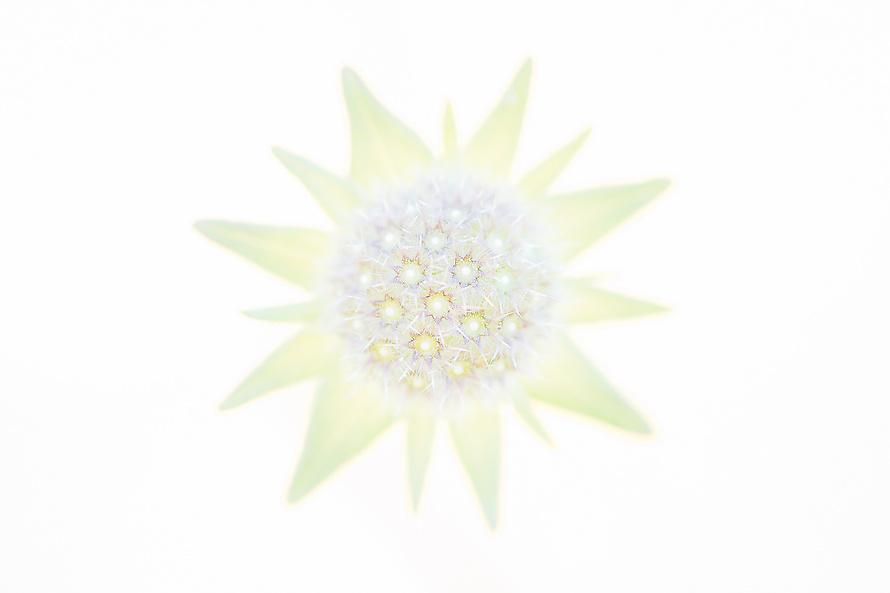 Blumenstern / A Star is born