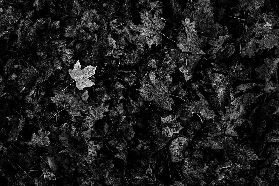 Novemberspaziergänge-004_