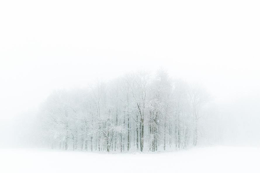 Winterlicher Waldrand