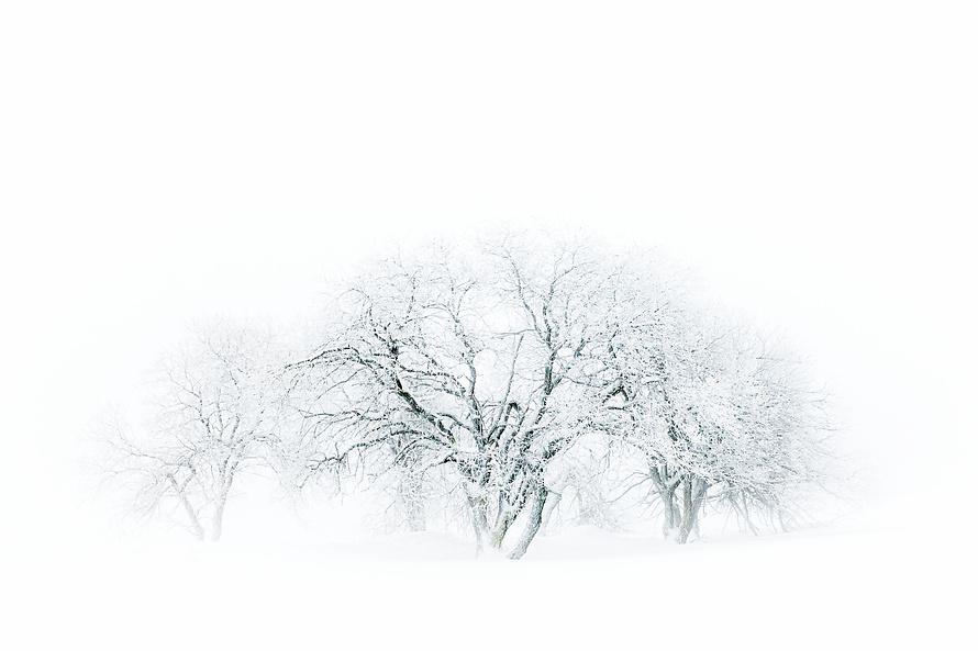 Whiteout 011_