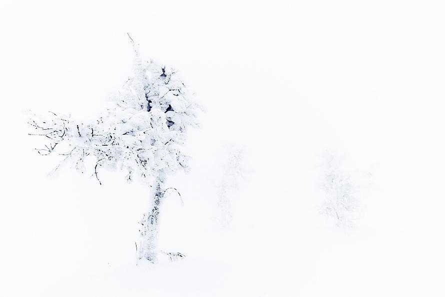 Whiteout 012_