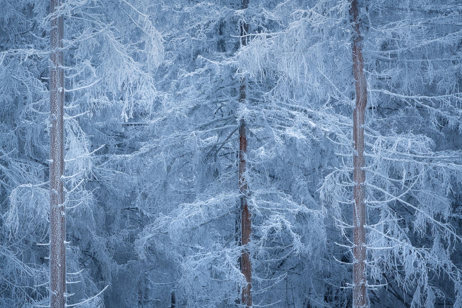 winter-gestalt-Kai Hornung