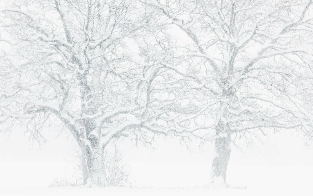 "Lersergalerie ""Winterbilder"""