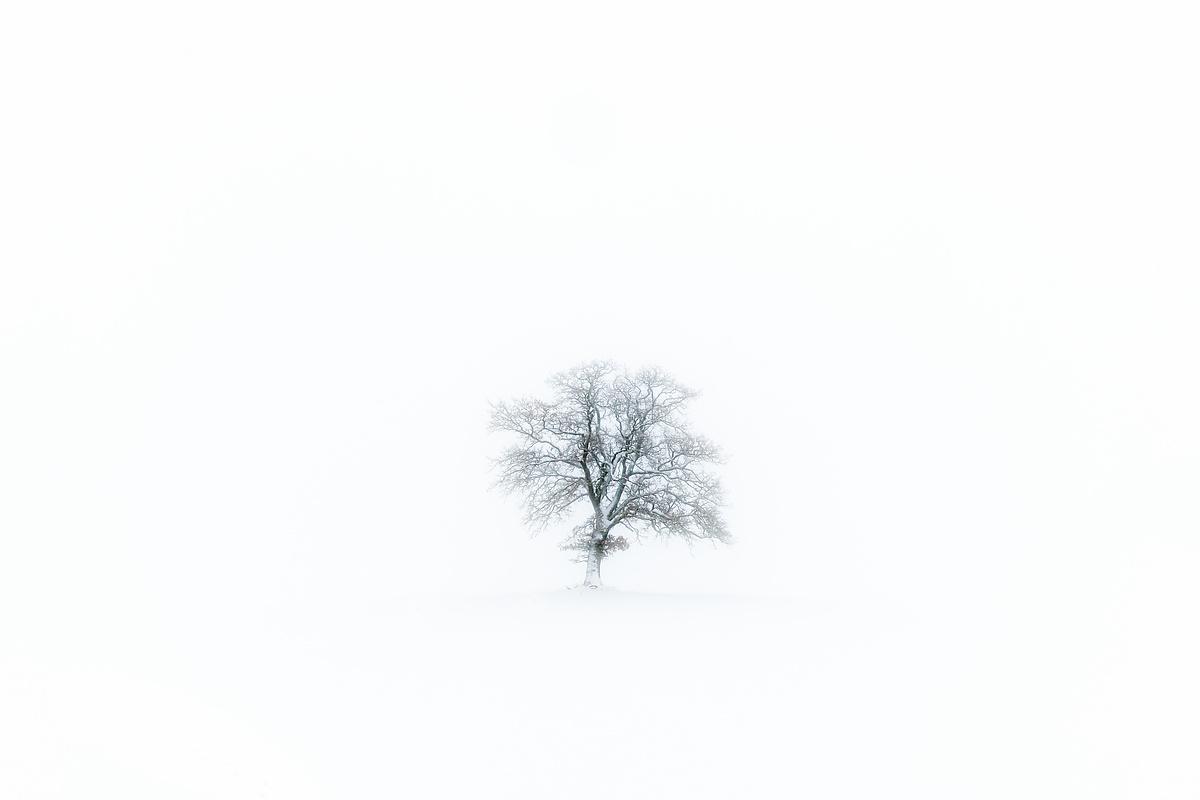 Obstbaum im Schnee
