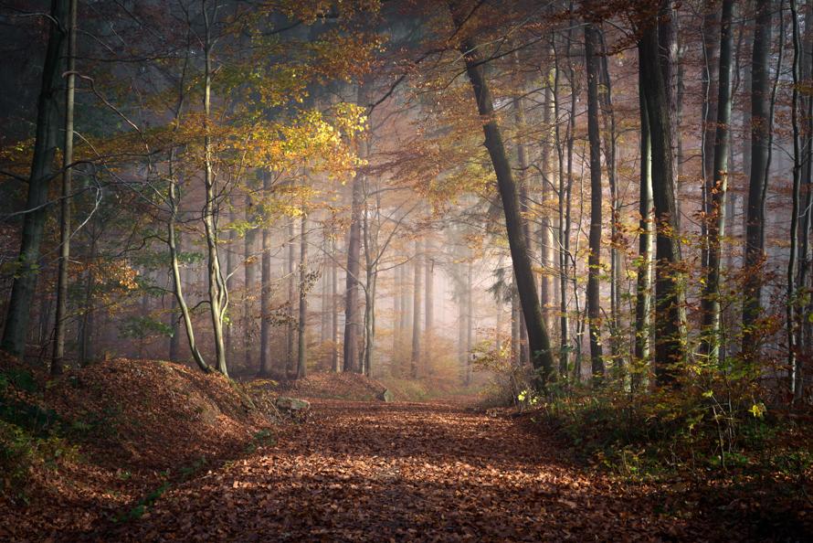 2 Waldmalerei