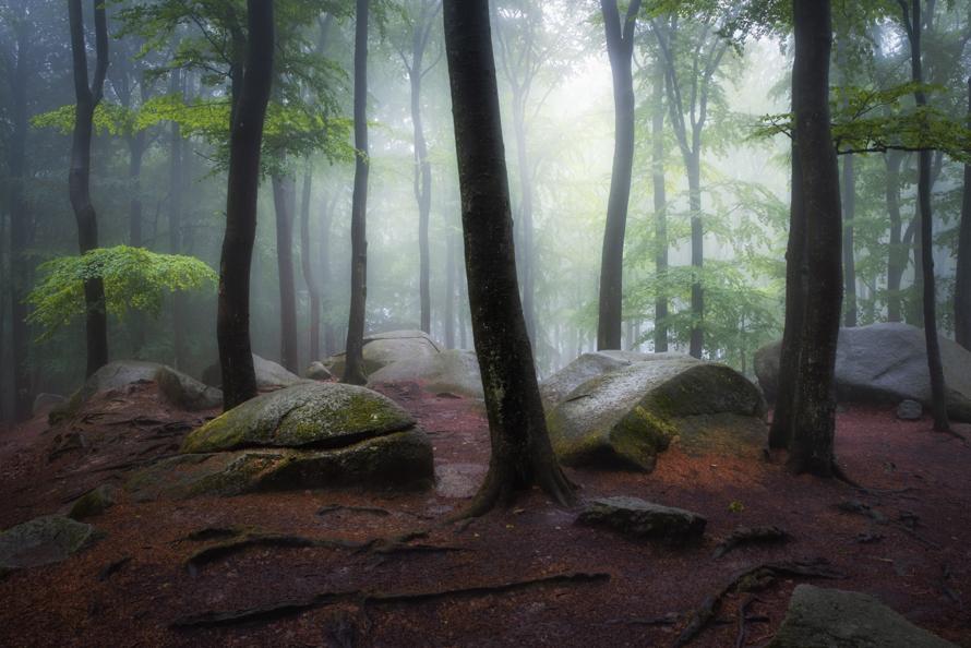 9 Frühlingswald