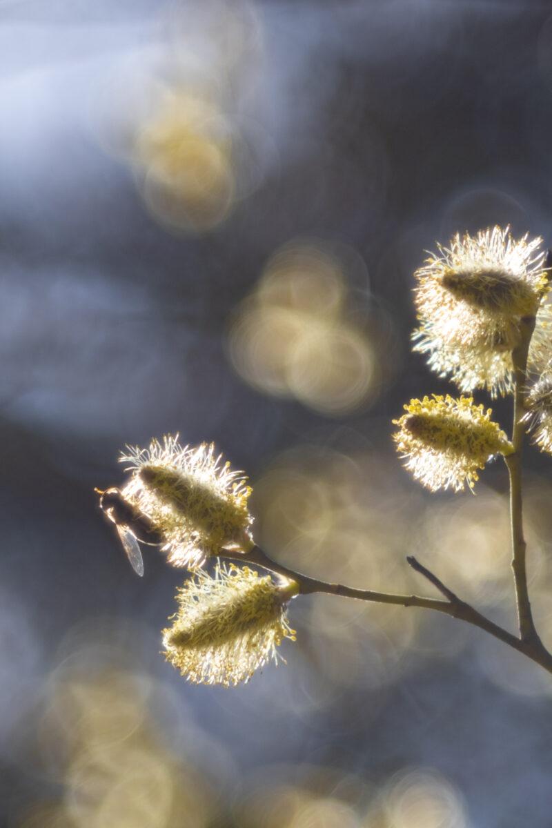 Gonaria Breidenbach - Goldener Frühling
