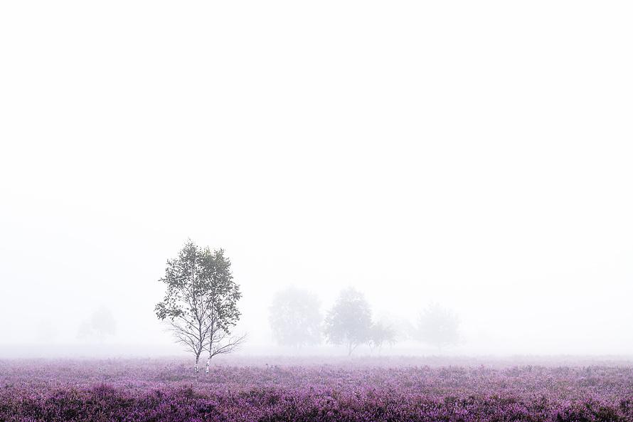 Nebel in der Heide