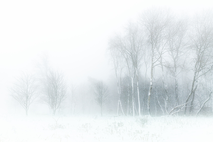 Birkenim Nebel 3