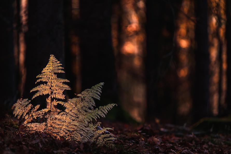 Leuchtender Farn